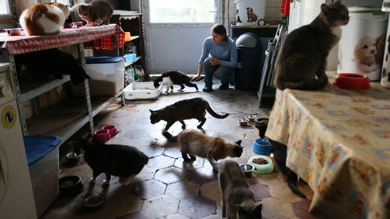 Una joven alimenta a 25 gatos callejeros en su apartamento de Bruselas, en 2014. (Reuters)