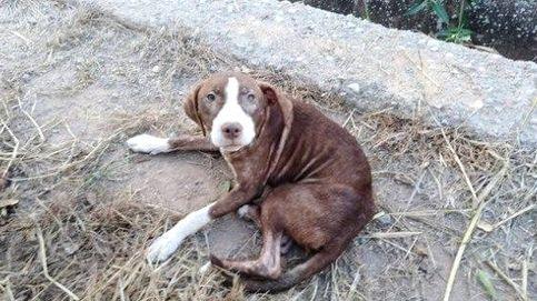 Adoptan a Estrella, la perrita que cuidó toda la noche de anciano con alzhéimer
