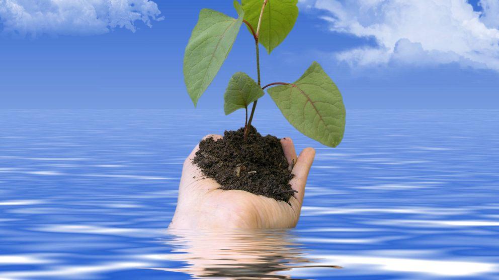 Cómo se relacionan tu alimentación, los gases de efecto invernadero y tu e-conciencia