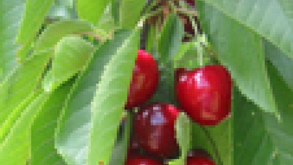 Zumo de cereza contra las agujetas