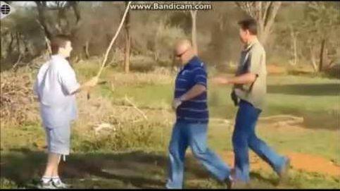 Un avestruz pisotea con furia a un hombre en Sudáfrica