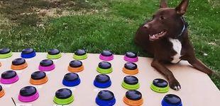 Post de El truco de una psicóloga para enseñar a 'hablar' a su perra: ya sabe 29 palabras