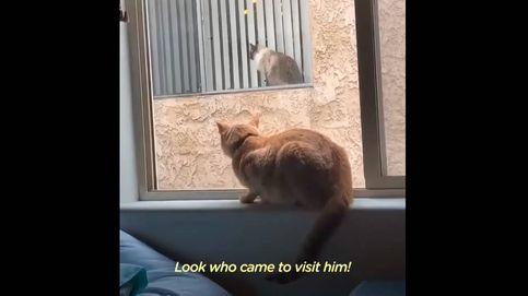 Dos gatos se conocen por la ventana y sus dueños les organizan una cita
