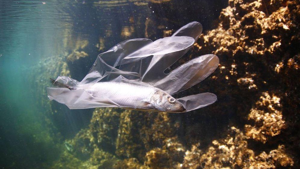Foto: Pez enredado en guante de plástico (Pixabay)