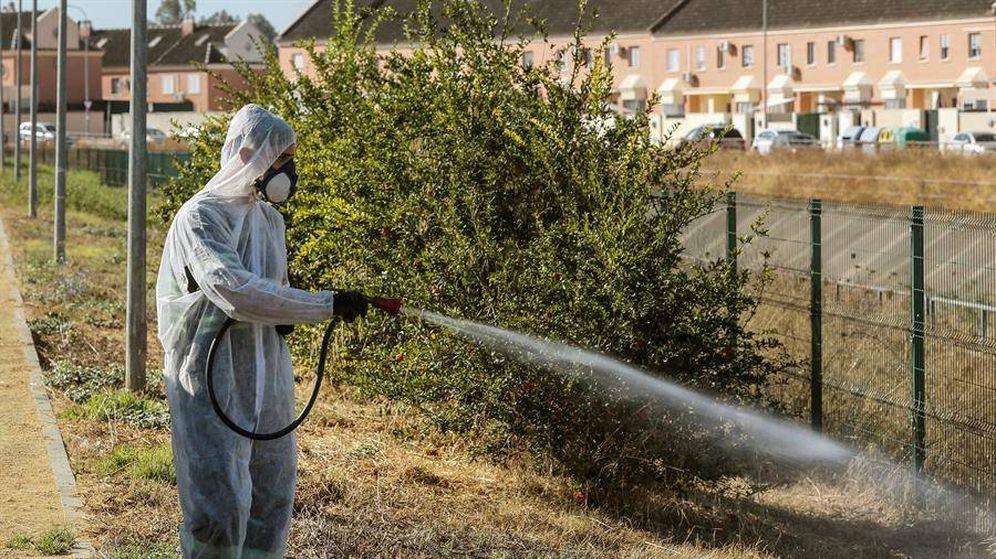 Foto: Fumigan Coria del Río (Sevilla) contra el mosquito que transmite la fiebre del Nilo. (EFE)
