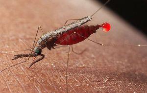Desarrollan una vacuna que podría terminar con la malaria