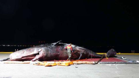 Encuentran el cuerpo de un cachalote de más de 12 metros de largo en el Támesis