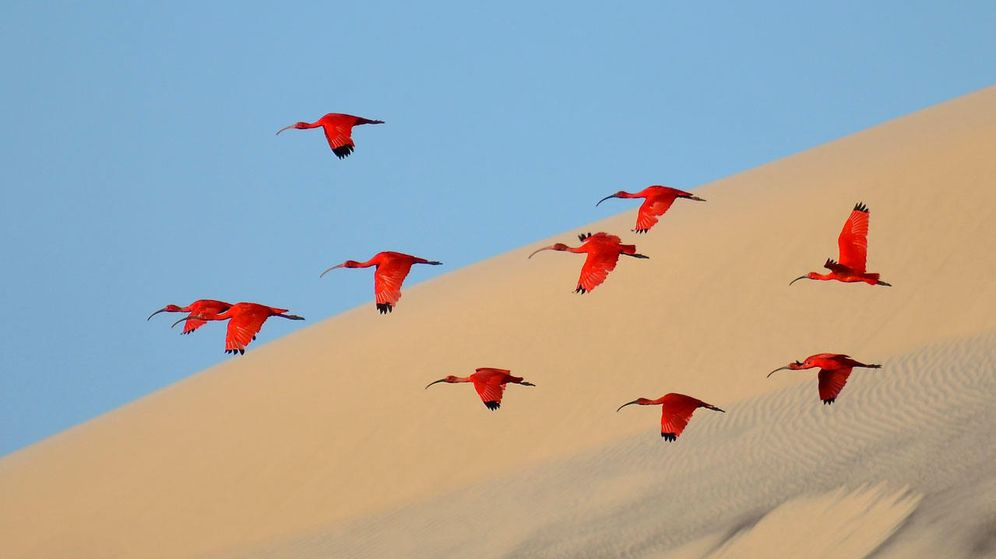 Foto: Foto de recurso del vuelo de unas aves.