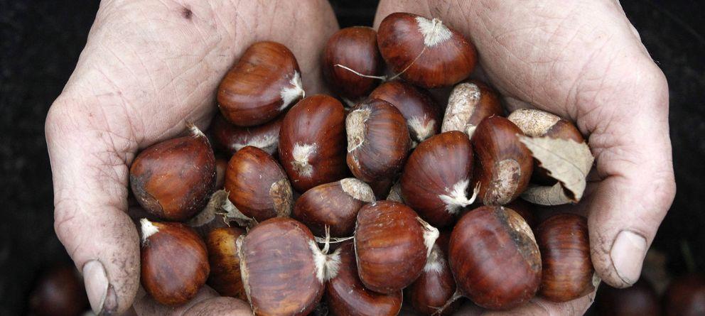 Maridaje de castañas, en su máxima expresión en otoño