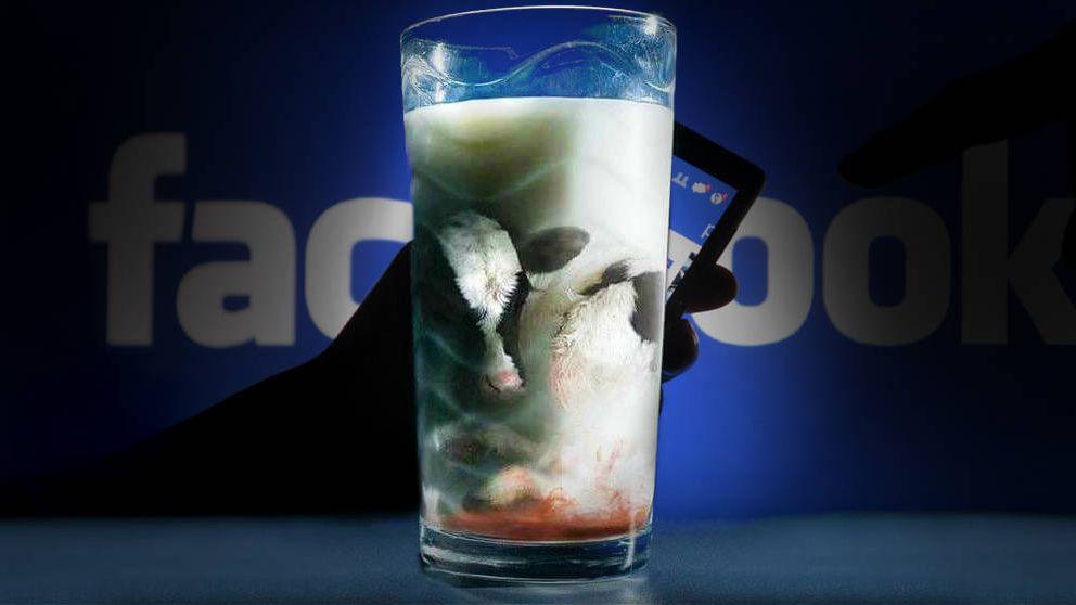 Leche con pus y cúrcuma anticáncer: los bulos alimentarios de Facebook