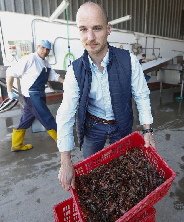 Foto: Ejemplares de cangrejo rojo americano en la  planta de procesado de Alcofan, en Isla Mayor (Sevilla). (EFE)