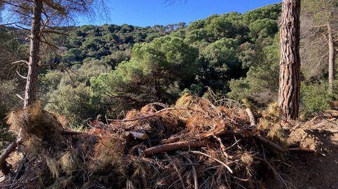 Los árboles caídos a causa de Filomena convierten el monte en una gasolinera