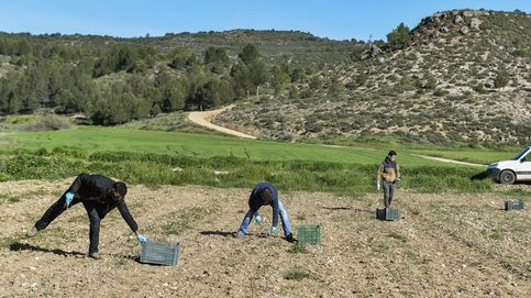 España va a reforzar su apuesta por la agricultura ecológica
