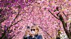 Explosión floral de cerezos en los parques de Londres en medio de la pandemia