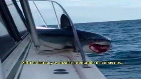 Tiburón salta a un barco y se queda atascado