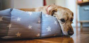 Post de Cómo acostumbrar a tu perro a quedarse solo después del confinamiento