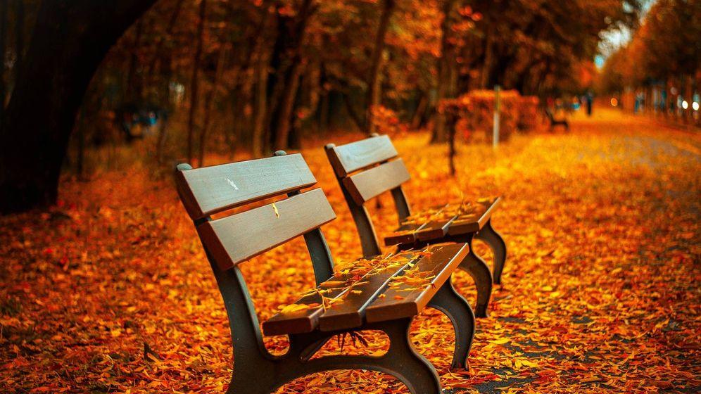 Foto: Las hojas de los árboles caen sobre un banco en otoño (Pixabay)
