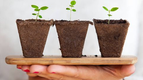 Con estas plantas en casa podrás respirar el aire más limpio de todos