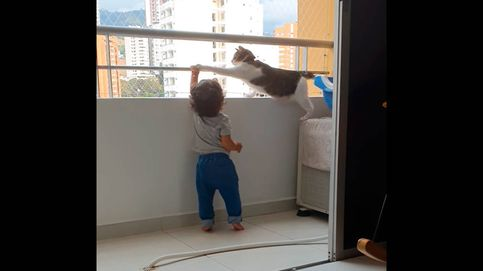 El vídeo viral de un gato que protege a un niño para que no se suba a un balcón