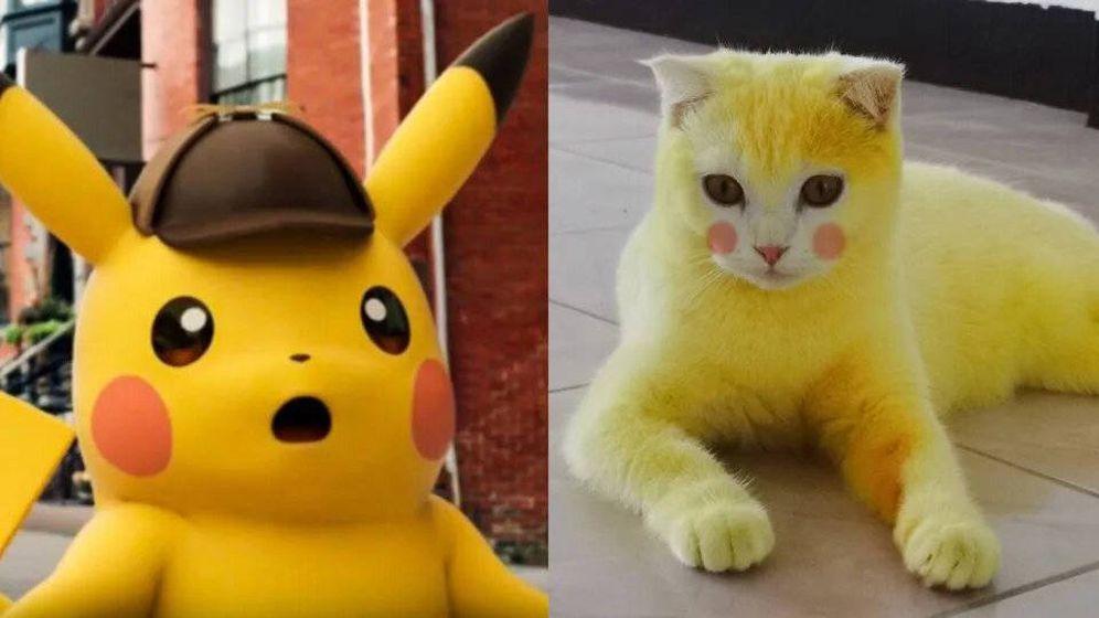 Foto: El de la izquierda es el verdadero Pikachu, por si no os dais cuenta. Foto: Reddit