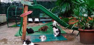 Post de Un refugio de Barcelona acoge a los gatos de los fallecidos por coronavirus (y necesita ayuda)