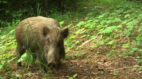 Los animales vuelven a Fukushima (sin importarles la radiación)