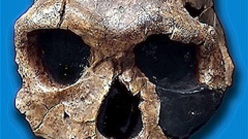 Descubren los restos de un antecesor desconocido del hombre