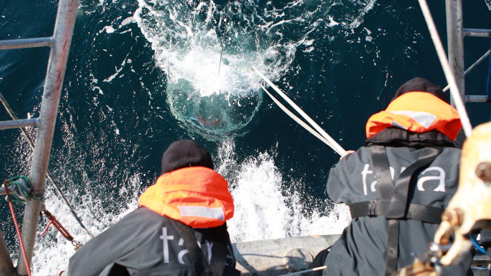 Foto: Todo lo que siempre quiso saber sobre el plancton