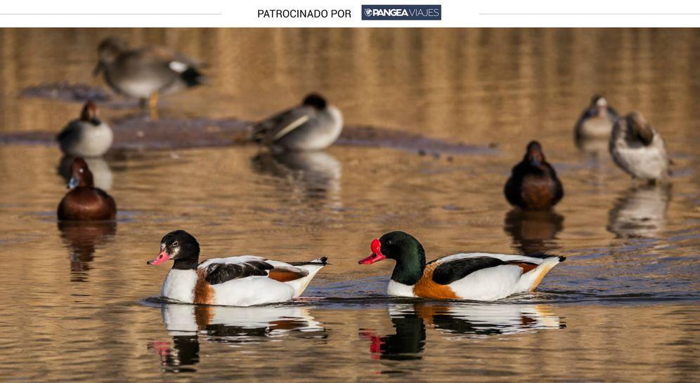 Foto: Patos en Las Tablas de Daimiel