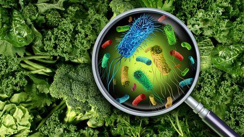 Nuevas bacterias, parásitos y toxinas: los riesgos alimentarios que vienen