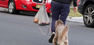 Post de Nueva Zelanda, contra el plástico: 60.000€ de multa a las tiendas que entreguen bolsas