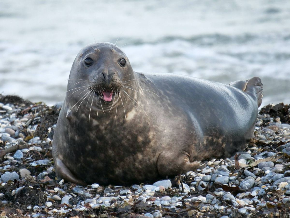 Foto: Vivía en la mayor zona protegida de Europa (Unsplash)