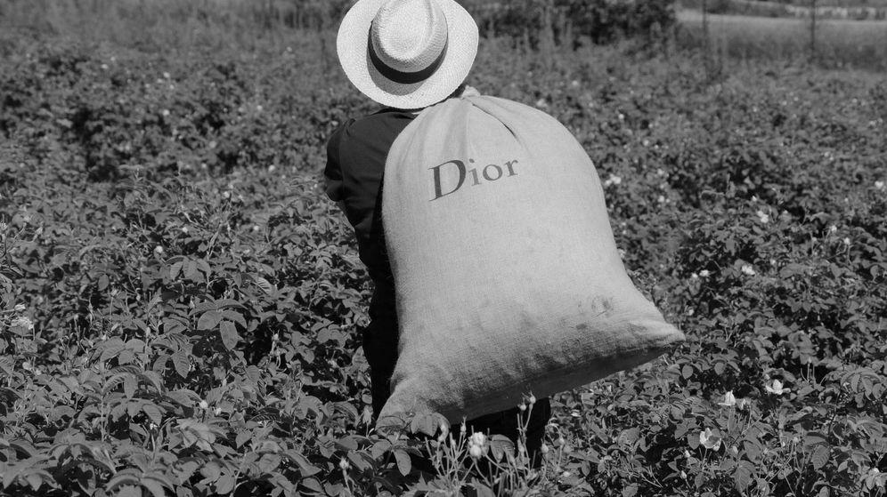 Foto: Una plantación de la rosa centifolia de Dior. (Reuters)