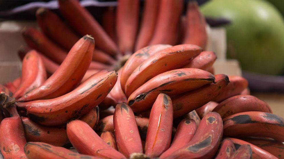 Foto: Ya se cultiva en Canarias y es muy propio de Ecuador. (iStock)