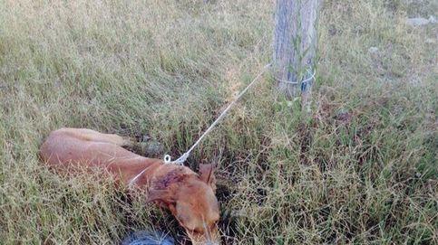 Rescatan con vida a un perro apuñalado y atado de sus cuatro patas en Almería
