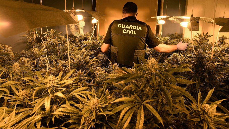 Cae una red internacional de tráfico de marihuana entre España y Serbia