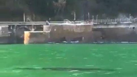 Una ballena de nueve metros se 'muda' a Zarauz