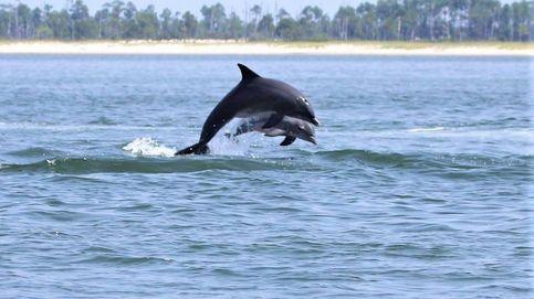 Los delfines se están muriendo de forma alarmante, y nadie sabe por qué