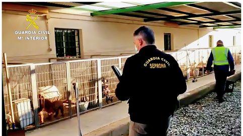 Detenidos por cortar las cuerdas vocales a los perros en un criadero de Granada