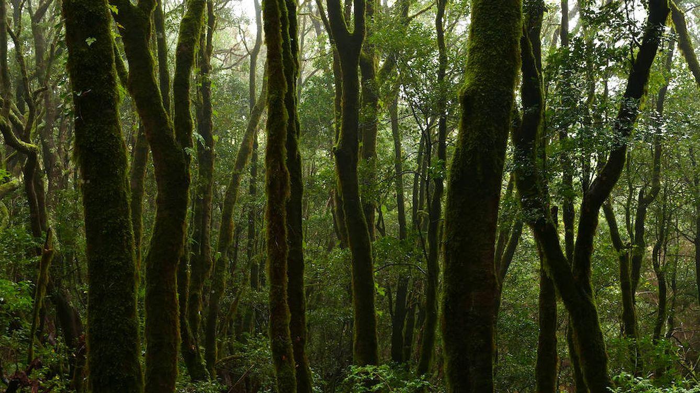 Vídeo: Laurisilvas de Canarias, la última selva europea