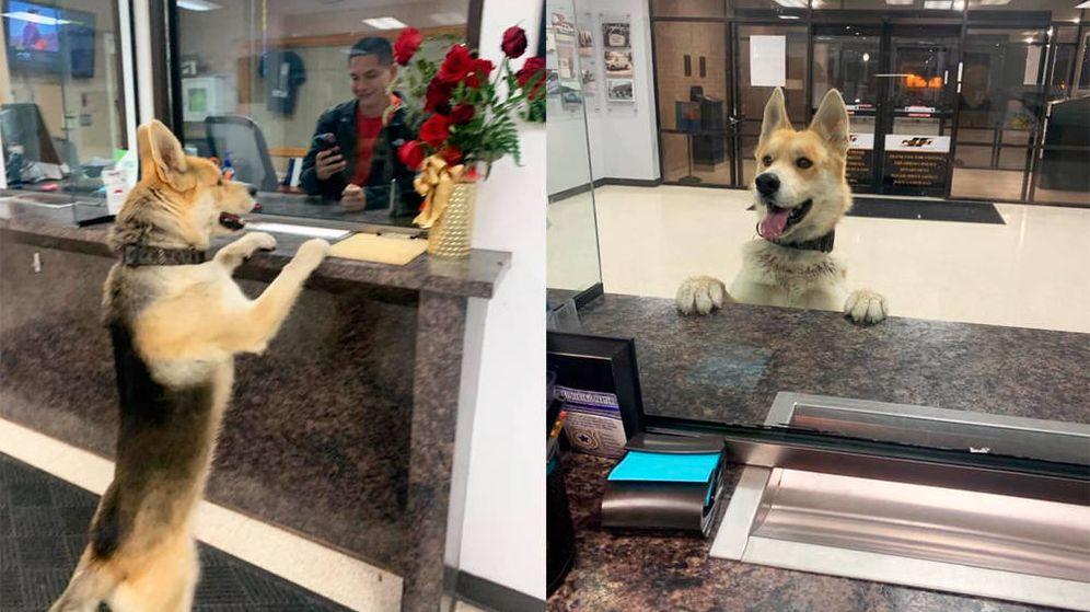 Foto: Chico subió sus patas ante la ventanilla para explicar su caso a los agentes (Foto: Facebook)