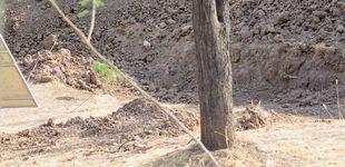 Post de El reto viral más difícil: ¿eres capaz de encontrar al leopardo que hay en esta foto?