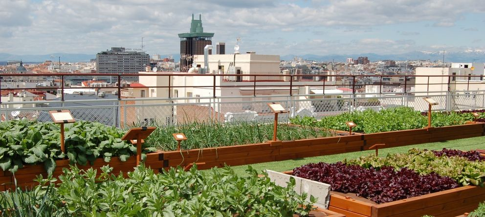 Foto: Vista desde el huerto del hotel Wellington. (Foto: Hotel Wellington)