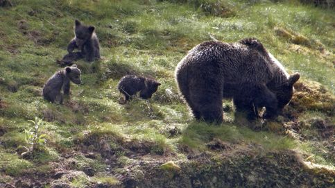 La razón por la que los animales salvajes no nos suelen atacar en el campo