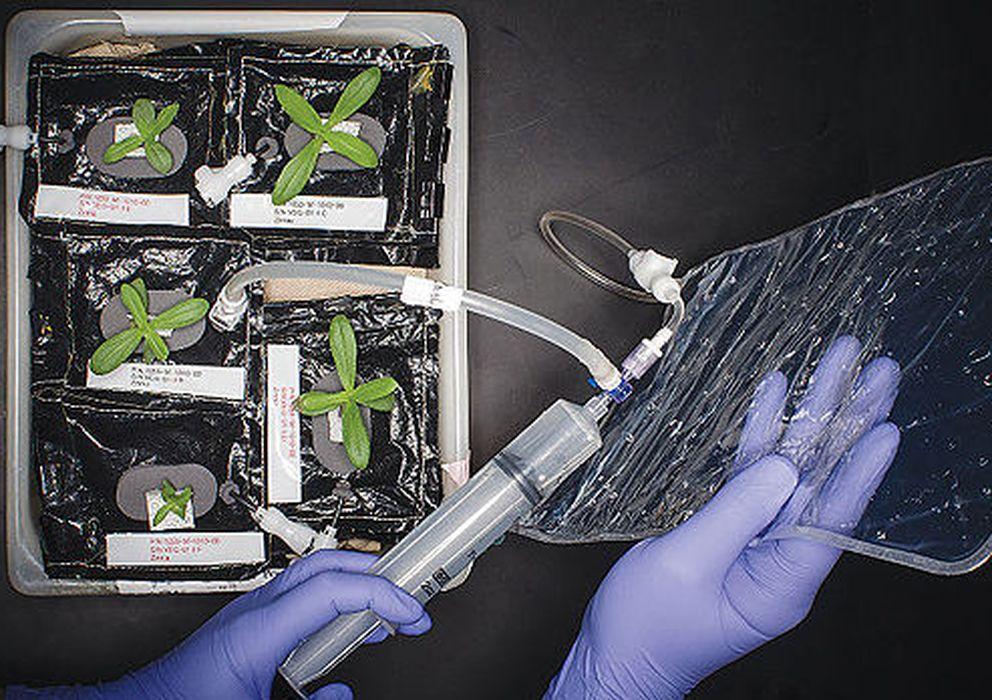Foto: Brotes germinados en un dispositivo de prueba (Foto: Modern Farmer)