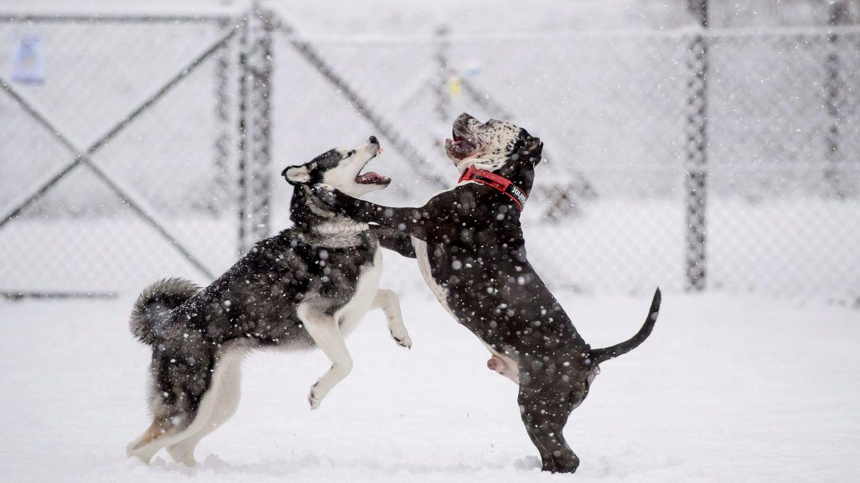 ¿Qué hacen tus perros cuando no les miras? Así cambian su comportamiento