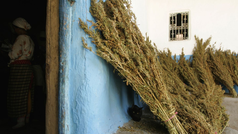 Plantas de marihuana en una pared de una casa en el Rif, en Chefchauen (Reuters).