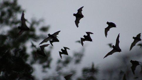 Hay una tormenta perfecta: advierten de más pandemias por infecciones de animales