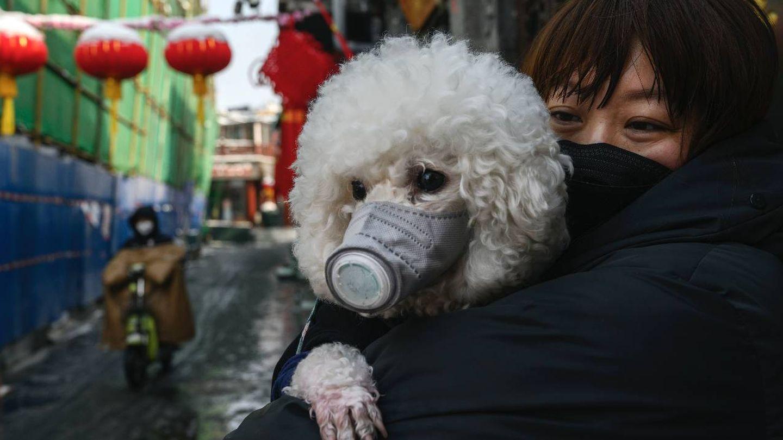 Un perro con una mascarilla en China. (Getty)