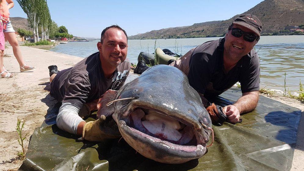 Foto: Un pescador francés capturó en julio un siluro de más de 100 kilos y 2,64 metros. (Ayuntamiento de Mequinenza)